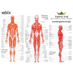 Poster mišičje